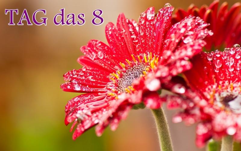 Flores-Rojas-Lluvia-Agua_01